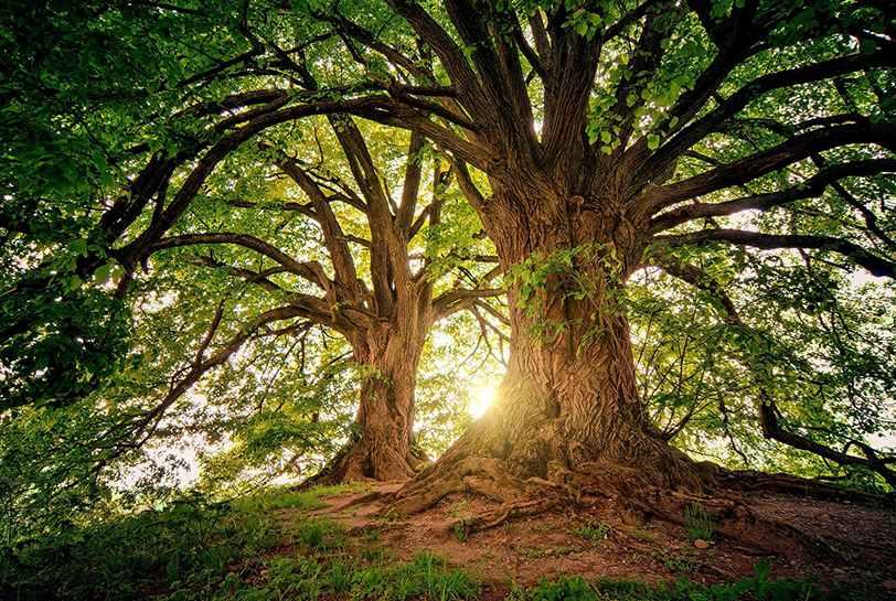 Los nueve hábitos del Alto Rendimiento Consciente y Sostenible (ARCS) - Portada